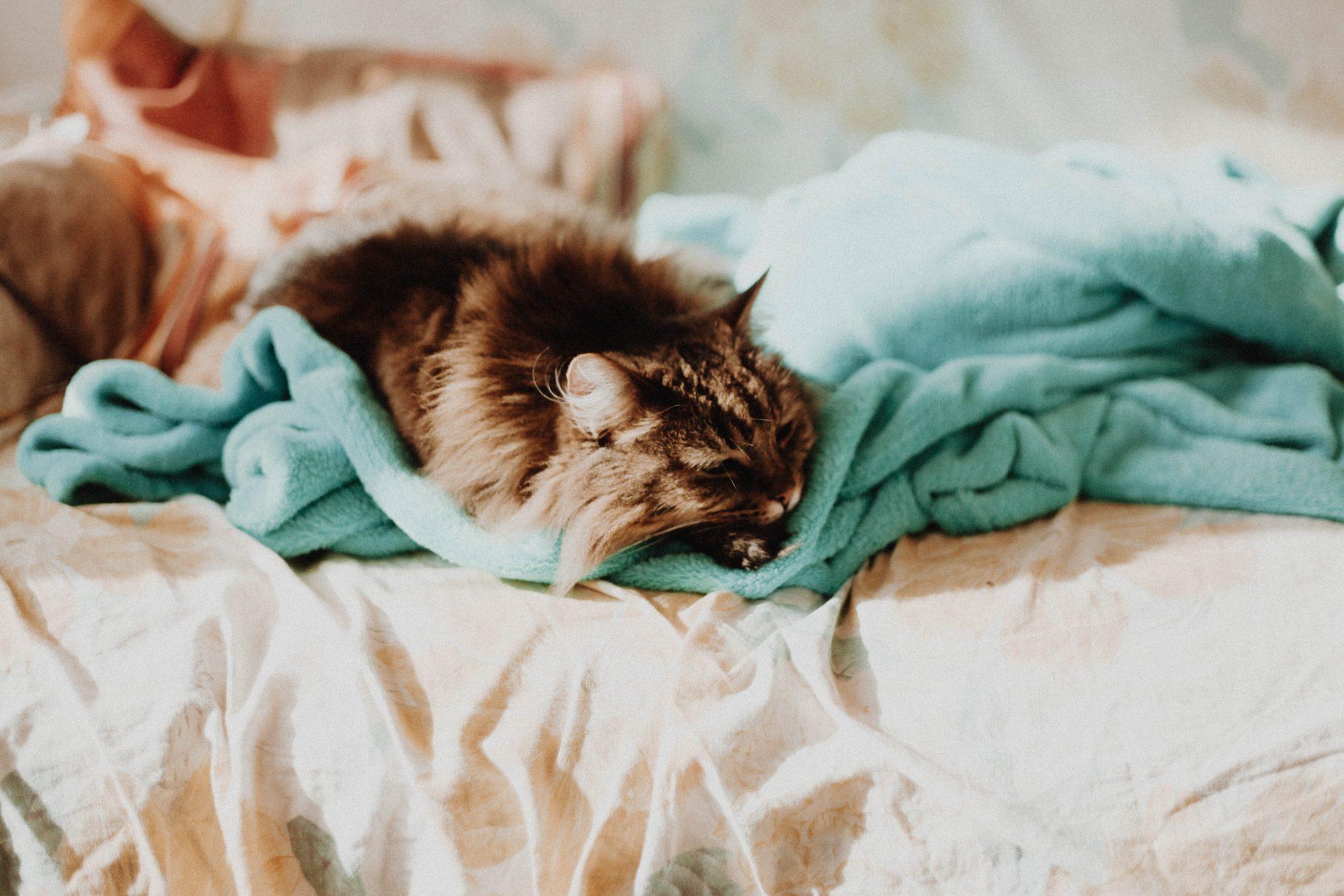 10 правил здорового сна
