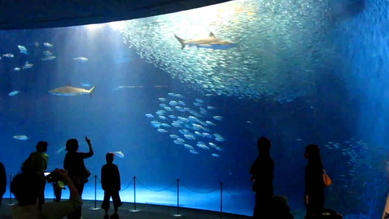 Океонариум