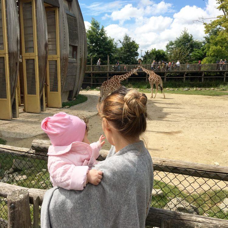 зоопарк в голландии